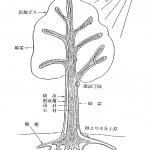 オーダ家具 木材の基礎知識 その2 「樹木の成長と木材の各部の名称」