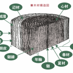 オーダー家具 木材の基礎知識 その3「木材の各部の名称」