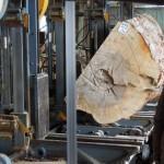 樹齢200年・広葉樹一枚板を製材する。