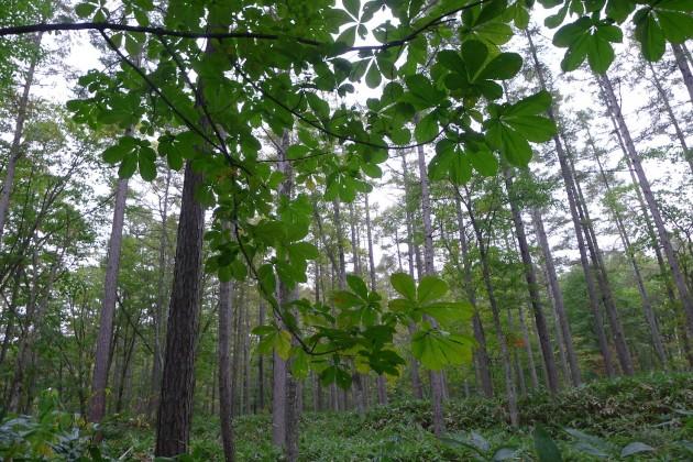 森へいくツアー下見2