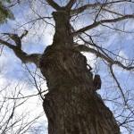 近くの山の木で家具をつくる