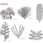 オーダ家具 木材の基礎知識 その1「樹種の基本」