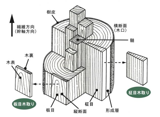 木材構造図2