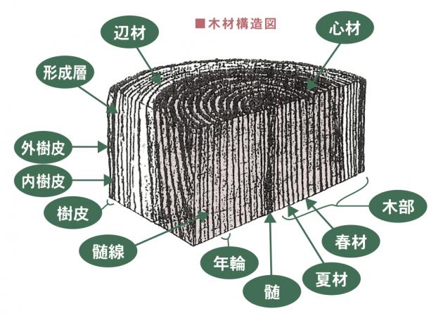 木材構造図