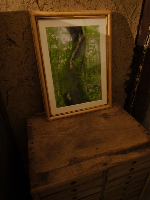 松葉屋 戸隠の森2