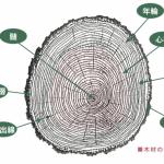オーダ家具 木材の基礎知識 その3 木材の各部の特性