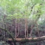 木が生きる場所の話