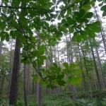 森へいくツアー下見に行ってまいりました。