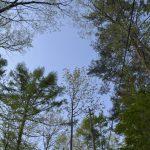 森へいくツアーVOL.5  下見に行ってきました_2